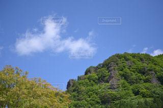 森の大きな木の写真・画像素材[713045]