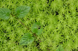 庭園の緑の植物の写真・画像素材[713442]