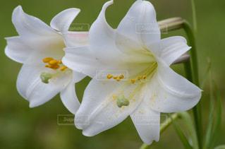 近くの花のアップの写真・画像素材[718599]