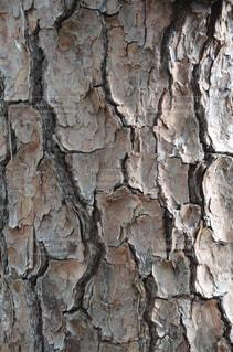 近くの木のアップの写真・画像素材[718601]