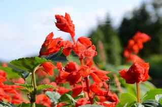 近くの花のアップの写真・画像素材[718607]
