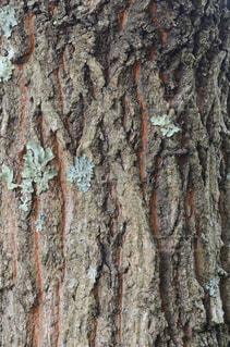 近くの木のアップの写真・画像素材[718608]