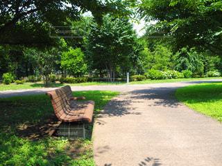 森の横にある空の公園ベンチの写真・画像素材[727122]