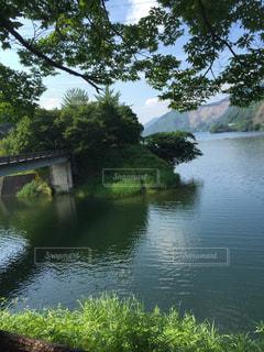 森に囲まれた池の写真・画像素材[1166504]