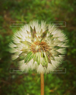 近くの花のアップの写真・画像素材[718092]