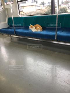 ウィンドウの横に座っている猫の写真・画像素材[714969]