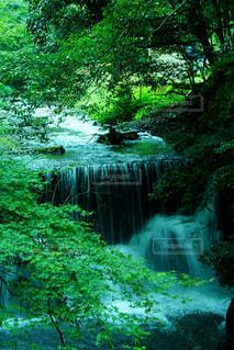 森の中の大きな滝の写真・画像素材[717868]