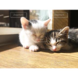 木製の表面の上に横たわる猫の写真・画像素材[1369149]