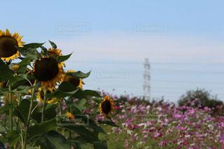 近くの花のアップの写真・画像素材[716824]