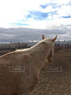 馬の背中の写真・画像素材[717837]