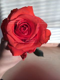 赤い花の写真・画像素材[717900]