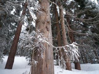 雪に覆われた木の写真・画像素材[717908]