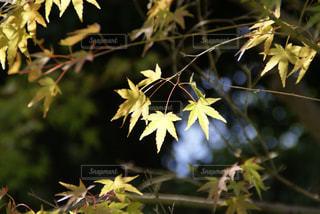 近くの植物のアップ - No.717912