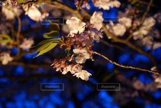 近くの花のアップの写真・画像素材[720921]