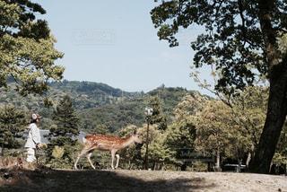 鹿と女の子の写真・画像素材[727407]