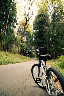 マウンテンバイクで森林浴の写真・画像素材[732323]