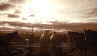 日没の上に立っている馬の群れ - No.894232
