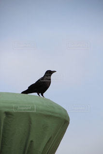 棚の上に座っている鳥の写真・画像素材[894303]