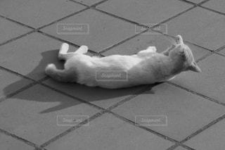 道で毛づくろいする猫の写真・画像素材[931830]