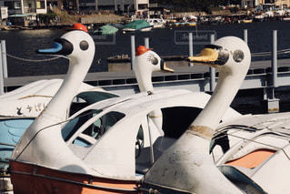 白鳥ボートの写真・画像素材[945339]
