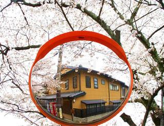 桜のミラー - No.947026