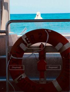 船に訪ねてきたカモメの写真・画像素材[947028]