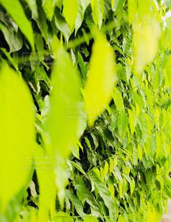 葉っぱのパターン - No.947038