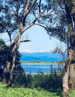 琵琶湖を臨む自然の窓の写真・画像素材[947039]