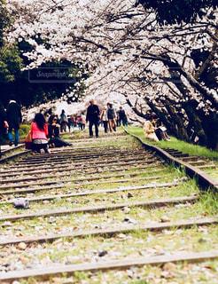 桜の線路の写真・画像素材[947040]