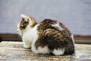 テーブルの上に座って猫の写真・画像素材[1063923]