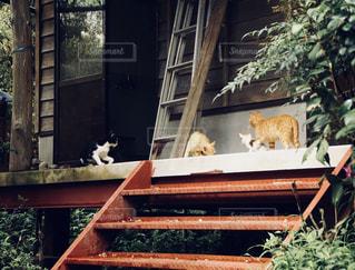 猫の集会の写真・画像素材[1070132]