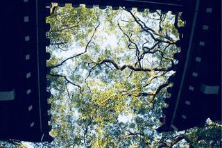 門の下から仰ぐ新緑の写真・画像素材[1104334]