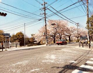 桜色の交差点の写真・画像素材[1324836]