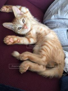 ベッドの上で横になっている猫の写真・画像素材[716215]