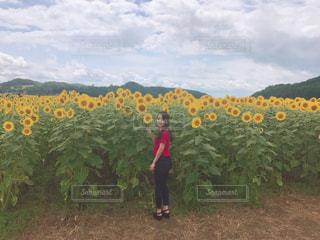 ひまわり畑の女の子の写真・画像素材[717997]