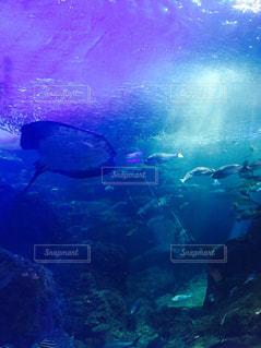 水の水中ビューの写真・画像素材[716536]