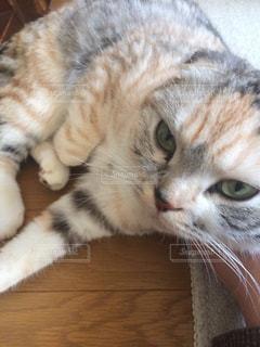 ネコと目が合うの写真・画像素材[726283]