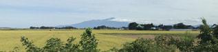 稲刈りの進む鳥海山の写真・画像素材[1473147]