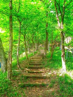 緑豊かな緑の森の写真・画像素材[718071]