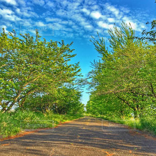 道の端に木の写真・画像素材[718077]