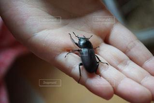 小動物を持っている手の写真・画像素材[720382]
