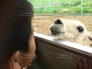 動物を抱きかかえたの写真・画像素材[726335]