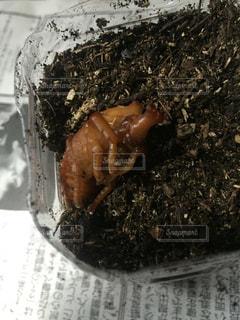 ケーキは、チョコレートで覆われています。の写真・画像素材[734145]