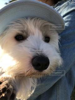 犬の写真・画像素材[1578676]