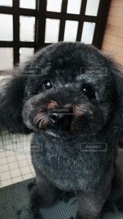 近くに犬のアップの写真・画像素材[1633267]