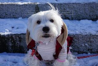 雪の中で座っている犬の写真・画像素材[1754574]