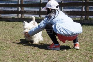 犬の写真・画像素材[2032654]