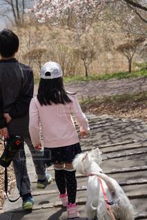 犬の写真・画像素材[2073220]