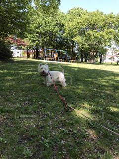 犬の写真・画像素材[2152331]