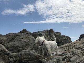 岩山の上に立つ犬の写真・画像素材[2313381]